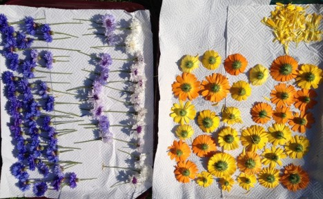Cornflowers&Calendula (1024x634) (800x495)